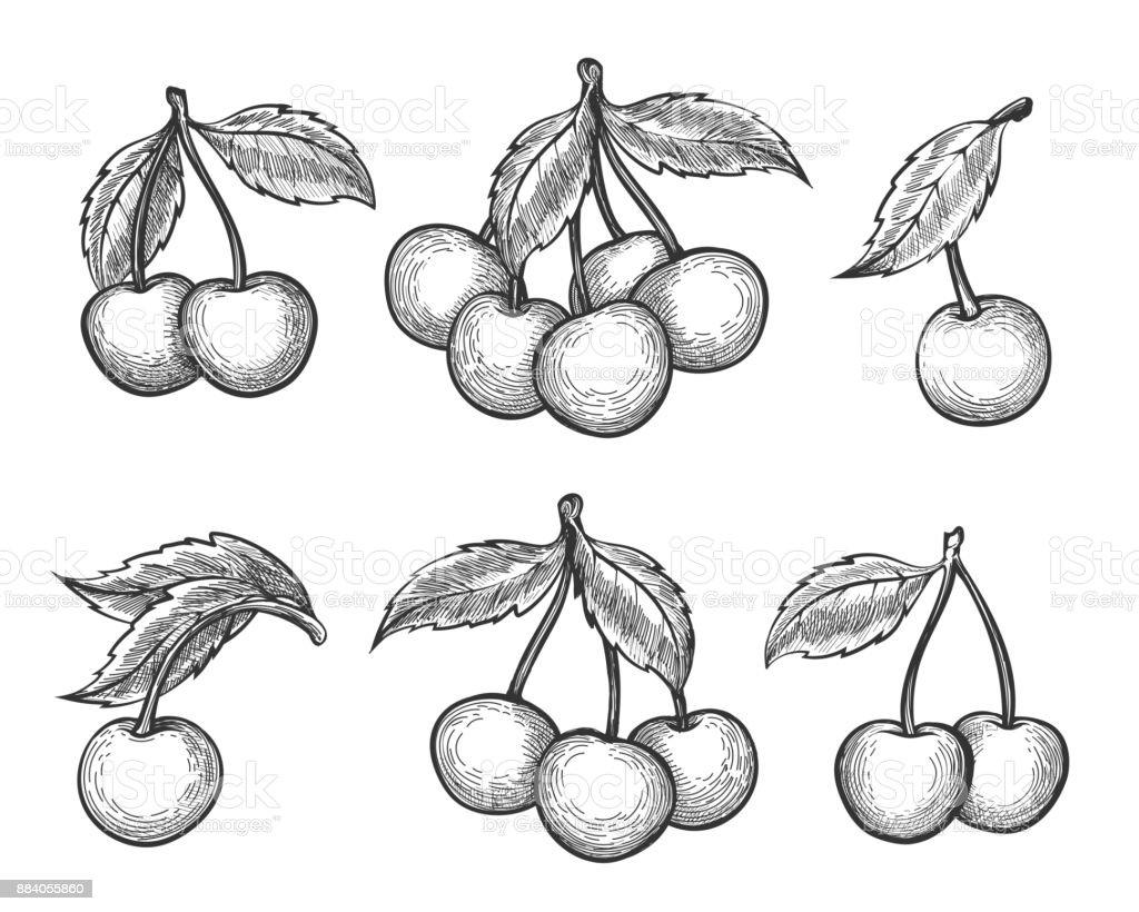 Cherry sketch icons set vector art illustration