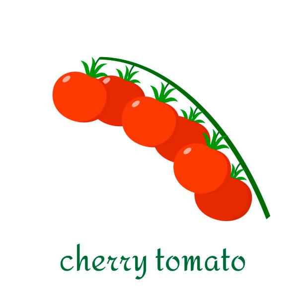 cherry tomato icon in flat style isolated on white background. - cherry tomato stock illustrations