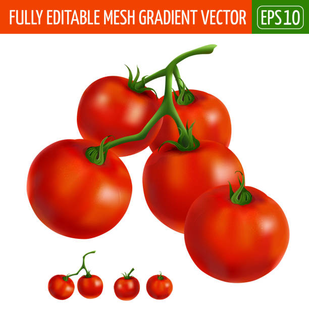 cherry tomatoes on white background. vector illustration - cherry tomato stock illustrations