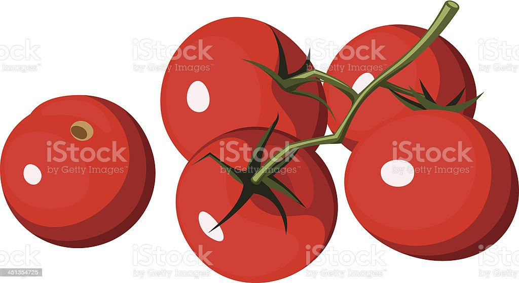 Cherry tomatoes. Vector illustration. royalty-free cherry tomatoes vector illustration stock vector art & more images of agriculture