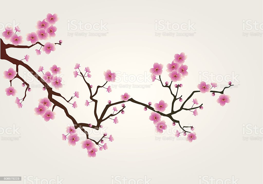 cherry tree blossom vector art illustration