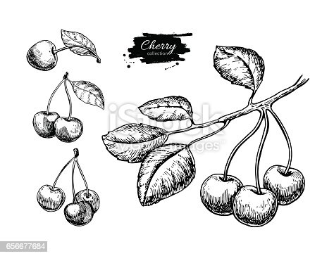 Cherry vector drawing set. Isolated hand drawn berry on white background. Summer fruit engraved style illustration. Detailed vegetarian food. Great for label, poster, print