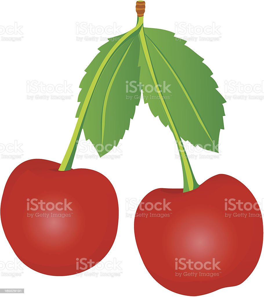Cherry royalty-free stock vector art