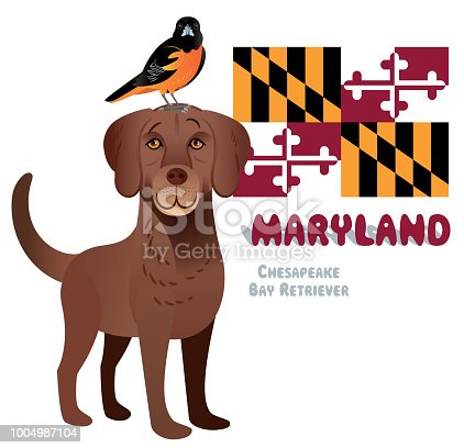Vector Chesapeake Bay Retriever and Baltimore Oriole