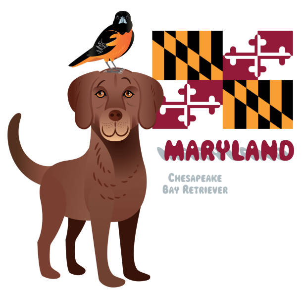 Chesapeake Bay Retriever and Baltimore Oriole vector art illustration