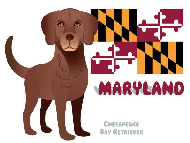 chesapeake bay retriever, maryland state - salisbury stock-grafiken, -clipart, -cartoons und -symbole