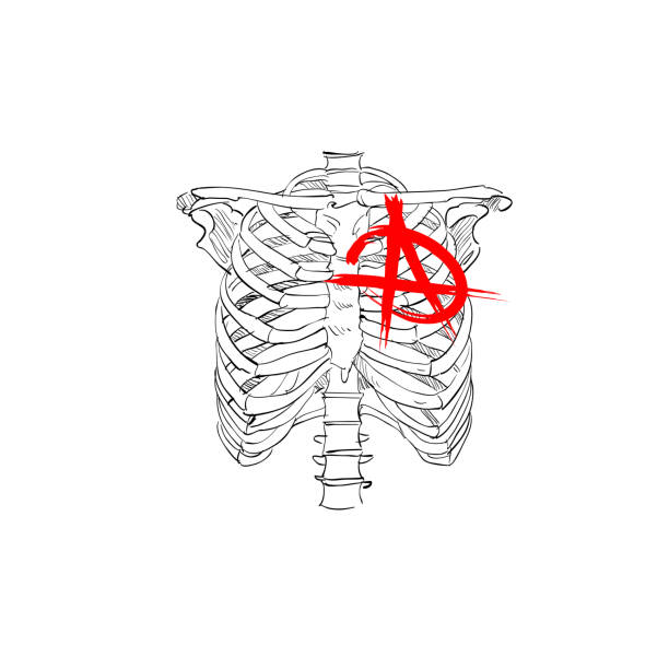 Chest skeleton with anarchy symbol. Fashion tsirt design. Hand drawn vector illustration. Chest skeleton with anarchy symbol. Fashion tsirt design. Hand drawn vector illustration. anarchy symbol stock illustrations