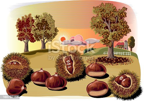 istock chestnut curls and trees 165797168