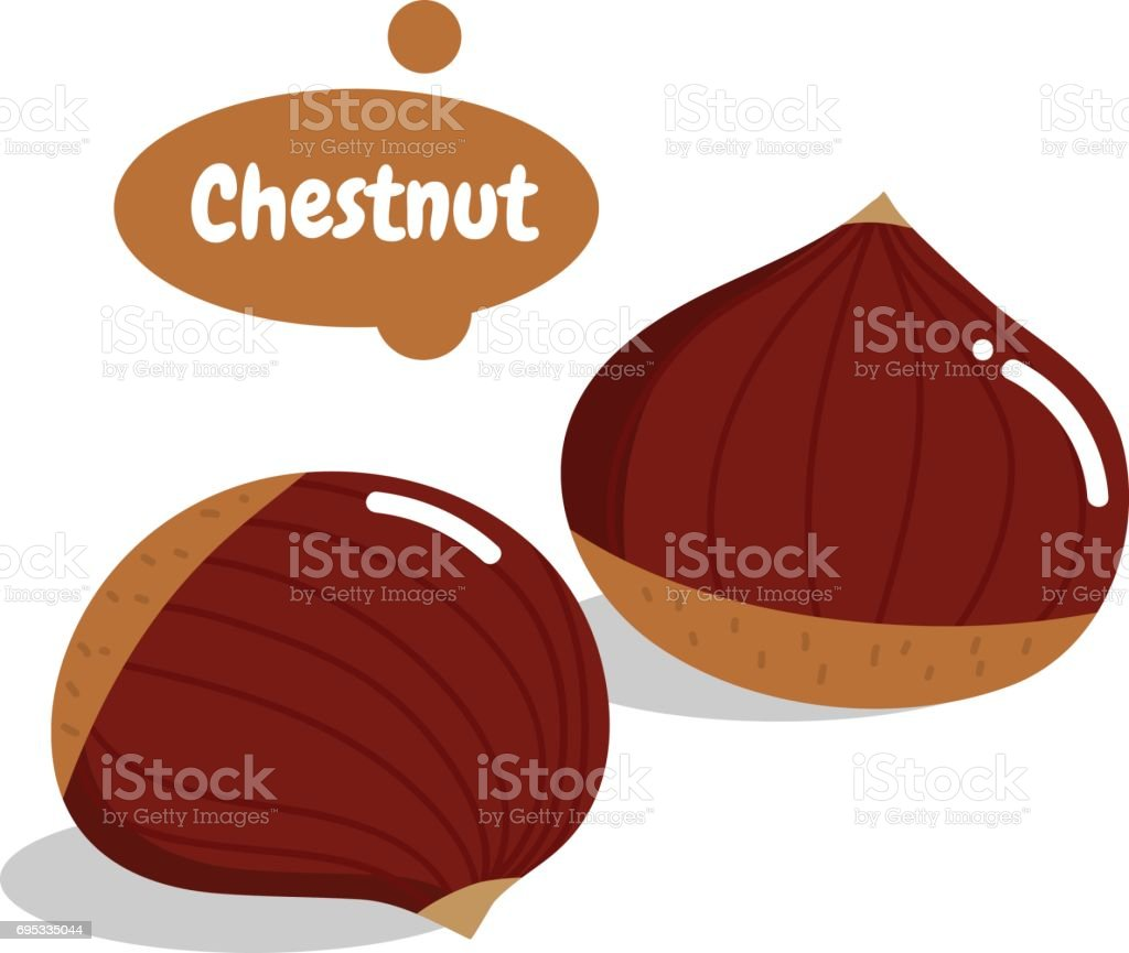 chestnut vector art illustration