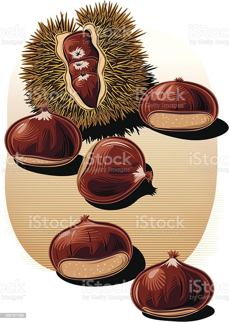 chestnuts royalty-free chestnuts stock vector art & more images of agriculture