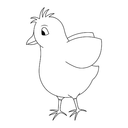 Chick. Nice hairstyle. The chick flaps its wings. Sketch. Vector illustration. Coloring book for children. The baby hen is ready to fly. Outline on white isolated background. Doodle style.