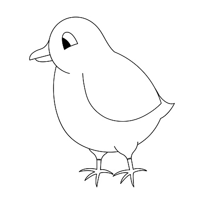 Chick. Sketch. Vector illustration. Coloring book for children. Chicken cub. Cute chick. Outline on white isolated background. Doodle style.