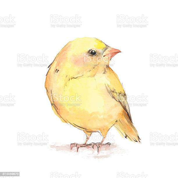 Chick watercolor illustration in vector vector id514459670?b=1&k=6&m=514459670&s=612x612&h=p9dins9 43jmscd  z99 mon2mxhblj kaamxtrdpm8=