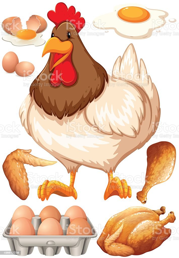 Chicken and chicken products vector art illustration