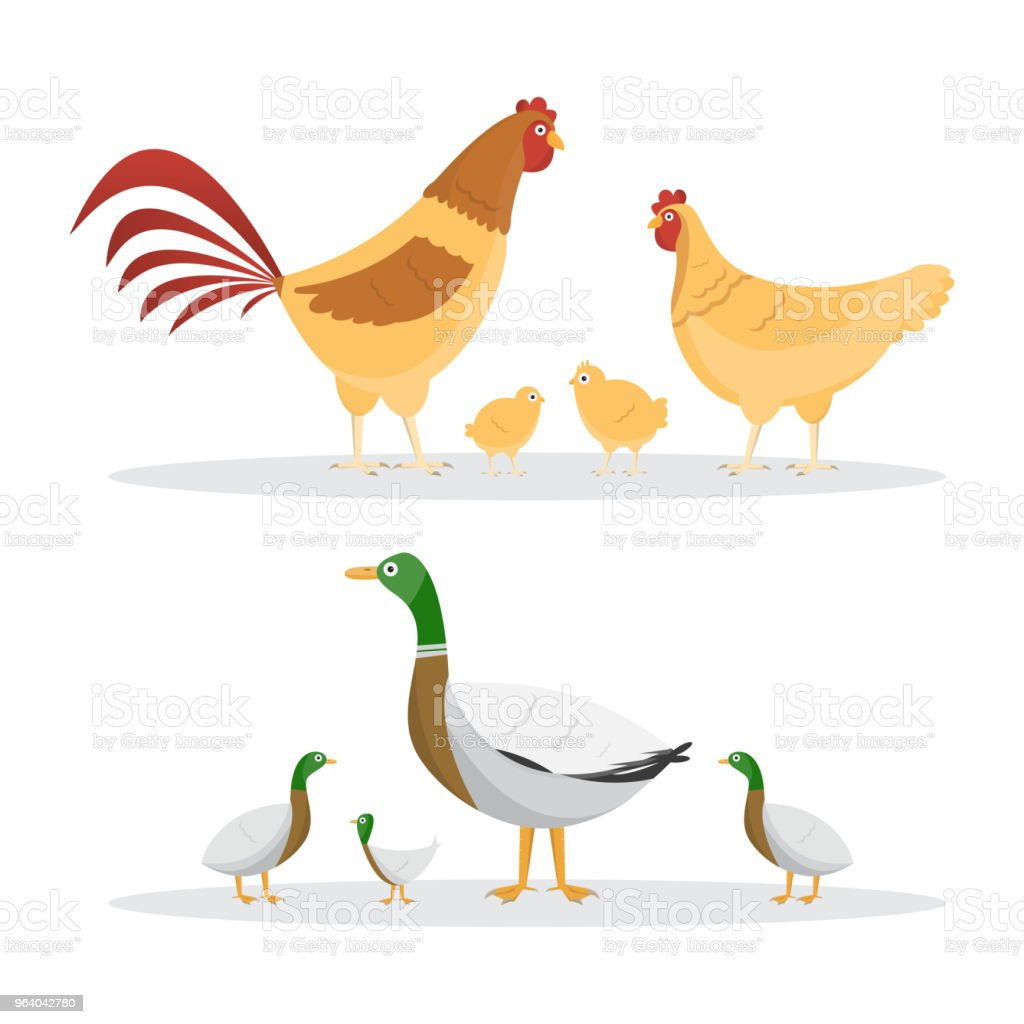 Chicken and ducks. set of animals inside farm isolated on white background - Royalty-free Animal stock vector