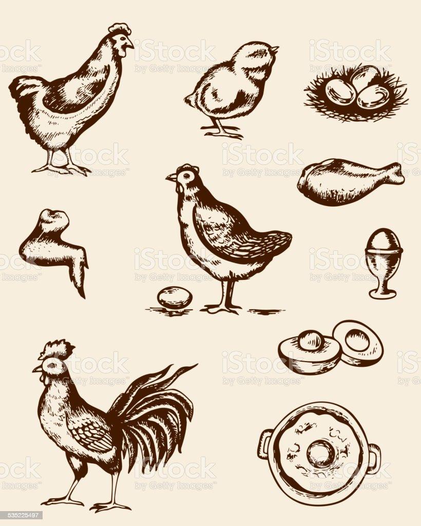 Chicken and eggs vector art illustration