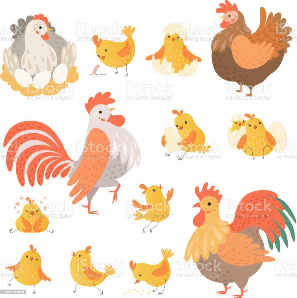 Chicken and rooster. Funny domestic farm animals birds eggs pollo...