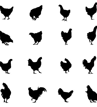 Chicken and Rooster Silhouette