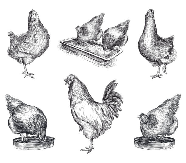 Royalty Free Chicken Wire Clip Art, Vector Images & Illustrations ...