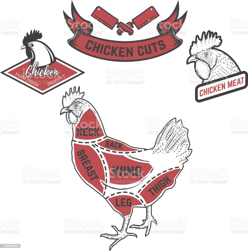 Chicken Butcher Diagram Design Element For Poster Menu Vector Detailed Wing Of A Illustration Royalty Free
