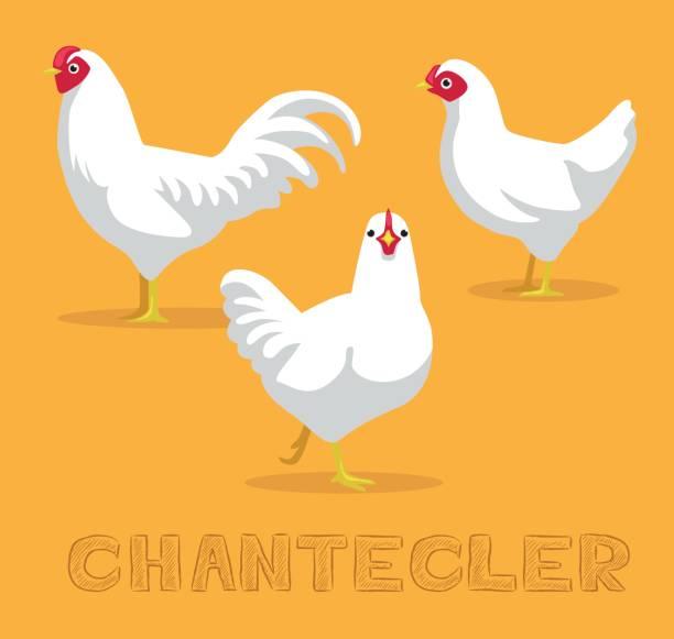 bildbanksillustrationer, clip art samt tecknat material och ikoner med kyckling chantecler tecknade vektorillustration - chicken