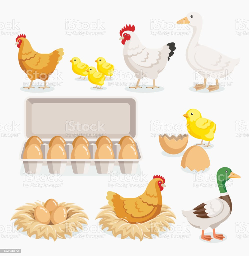 Chicken duck chick and chicken eggs on the nests. vector art illustration