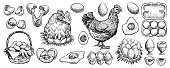 Chicken eggs hand drawn vector. Collection of farm design elements. Illustrations of siting hen on the nest, full basket, broken, boiled, fresh and other eggs for packaging or bird butchery shop logo.