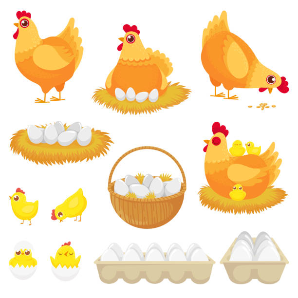 stockillustraties, clipart, cartoons en iconen met kippeneieren. kip boerderij ei, nest en dienblad van kippeneieren cartoon vector illustratie set - egg