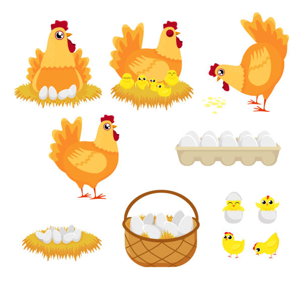 stockillustraties, clipart, cartoons en iconen met kippeneieren. kip boerderij ei, nest en lade van kippeneieren. chick kind, kippen karakter pasen mascotte en ei box. cartoon illustratie geïsoleerd icons set - egg