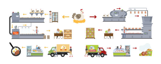 Chicken factory set. Chicken factory set. Making eggs and meat. poultry stock illustrations
