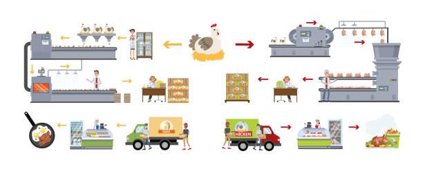 stockillustraties, clipart, cartoons en iconen met kip fabriek ingesteld. - poultry farm