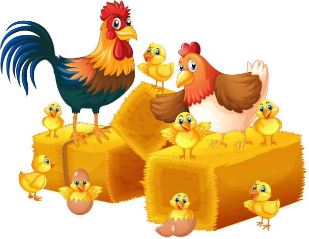 Huhn-Familie auf weißem Hintergrund – Vektorgrafik