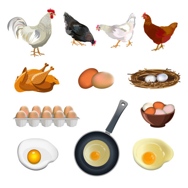 Chicken farm set Chicken farm set. Vector illustration isolated on white background poultry stock illustrations