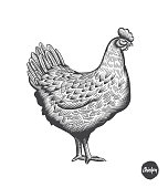 Chicken hand drawn illustration in engraving or woodcut style. Hen meat and eggs vintage produce elements. Badges and design elements for the chicken manufacturing. Vector illustration.