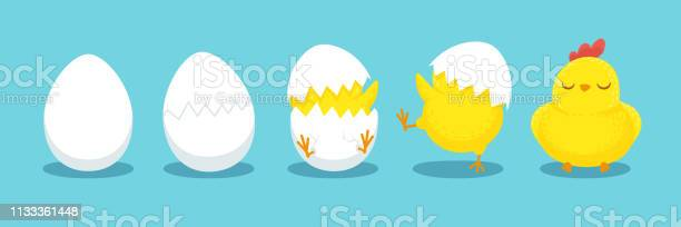 Chicken hatching cracked chick egg hatch eggs and hatched easter vector id1133361448?b=1&k=6&m=1133361448&s=612x612&h=lkkairtzjd1dibjebjghbamtxdtnqknnegfmp33uvm8=
