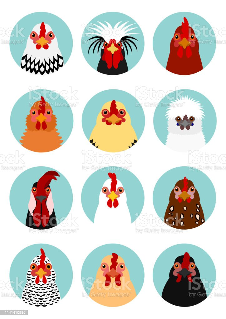 kyckling huvuden som - Royaltyfri Boskap vektorgrafik