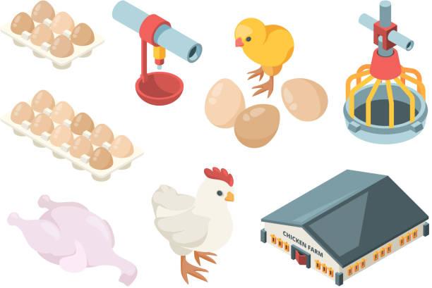 stockillustraties, clipart, cartoons en iconen met kippen productie. agrarische industrie bio biologische vogel voederen pluimvee werkers en boerderijgebouwen vector isometrisch - chicken bird in box
