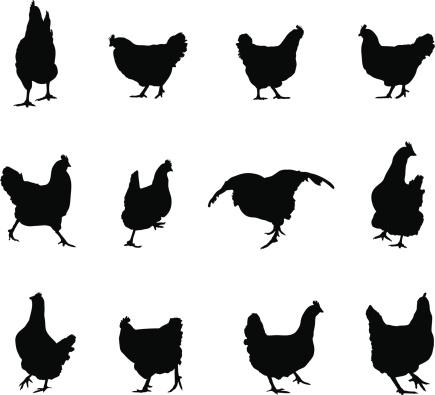 Chicken Silhouette.