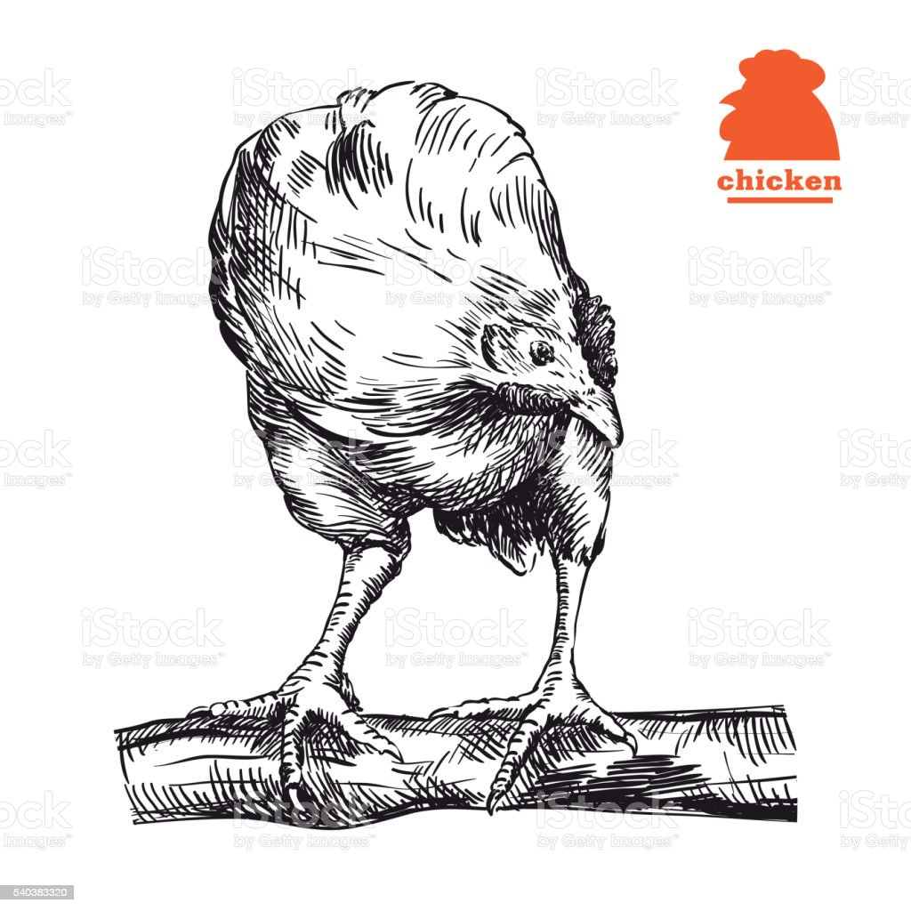 chicken standing on the perch vector art illustration