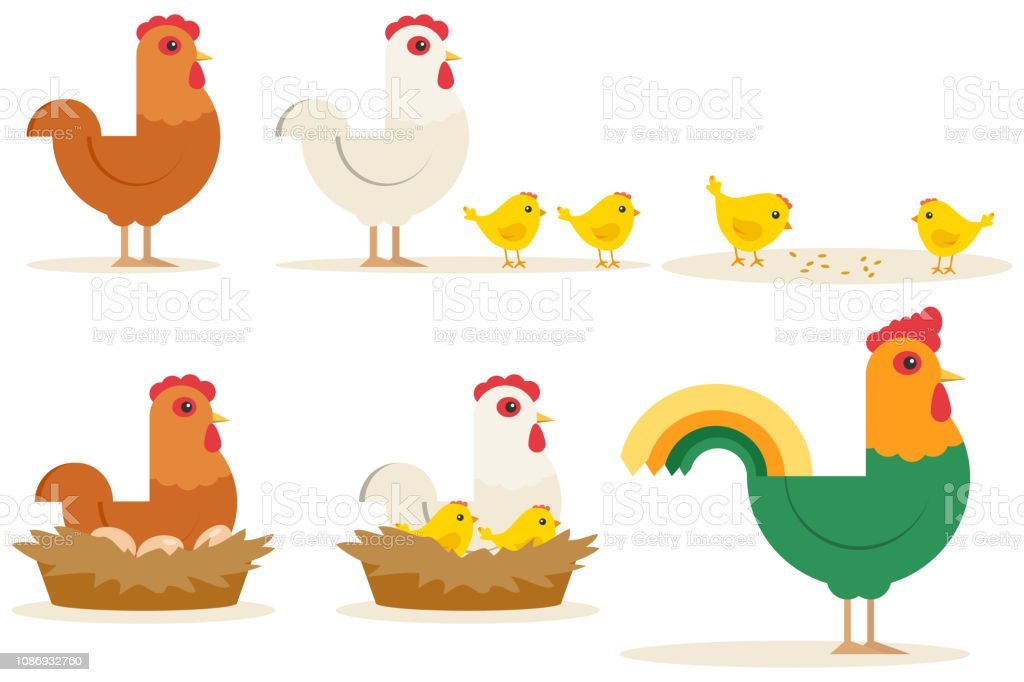 Chicken Vector Cartoon Chick Character Hen And Rooster
