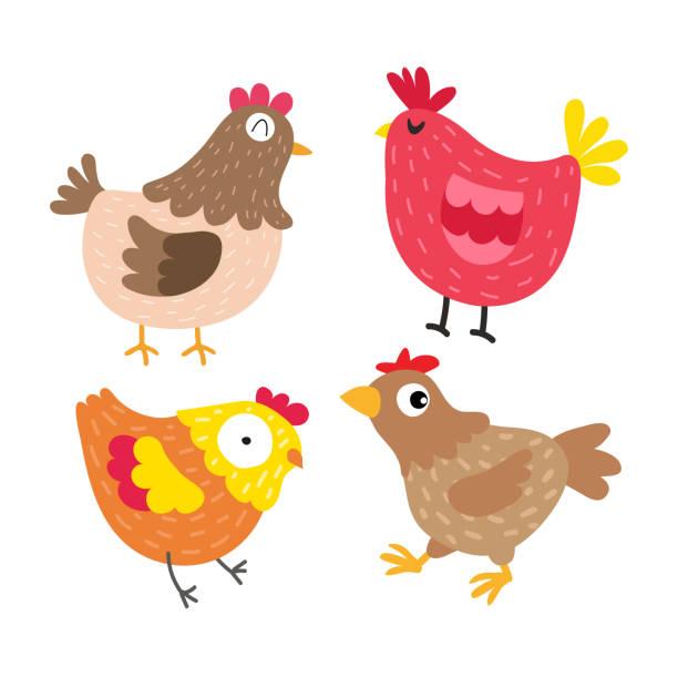 bildbanksillustrationer, clip art samt tecknat material och ikoner med kyckling vektor collection design - hönsfågel