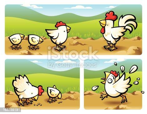 istock Chicken 165759191