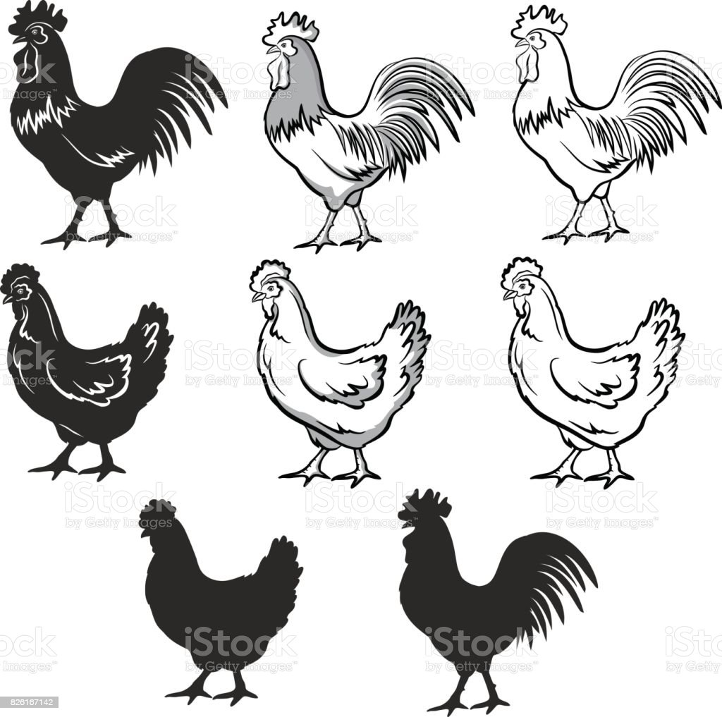 chickens set vector illustration in black and white contour and