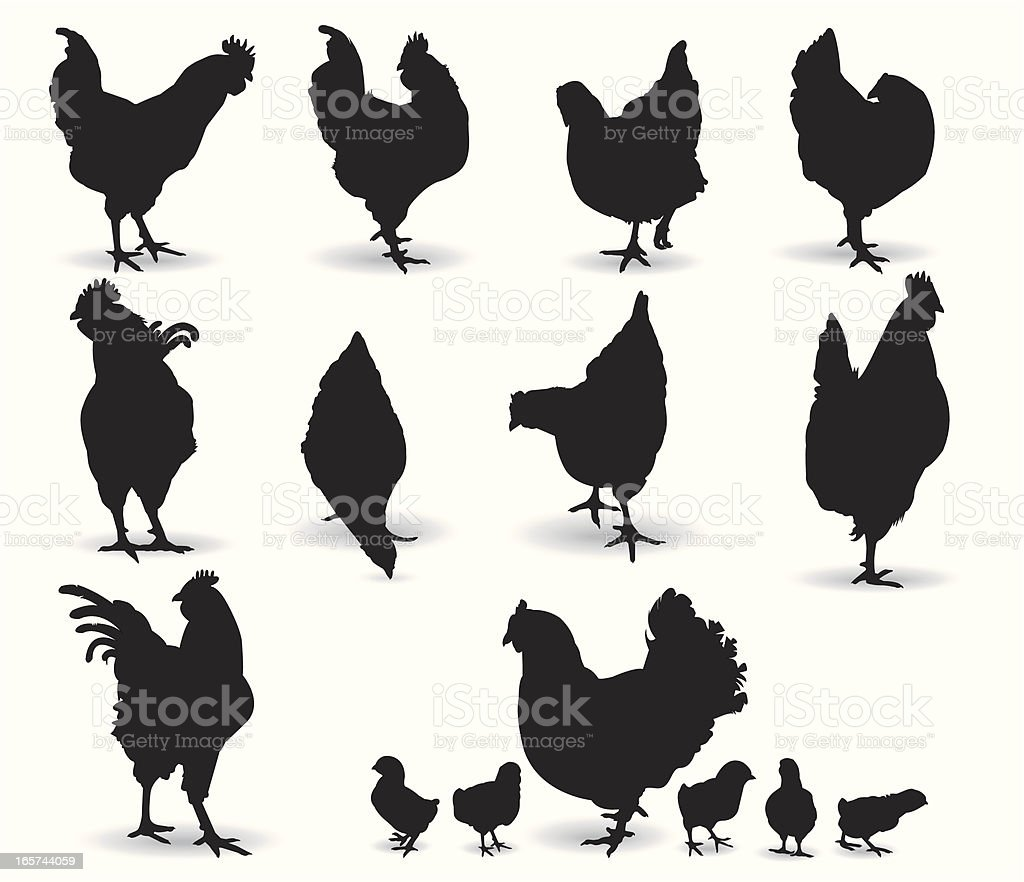Chickens vector art illustration