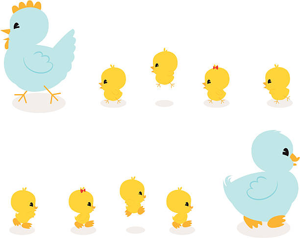 Chickies and Duckies! A cute troop of baby ducklings and chicks following their mother. duckling stock illustrations