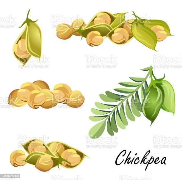 Chickpea plant pods and peas set of vector sketches vector id953628896?b=1&k=6&m=953628896&s=612x612&h=kba1adhdomzrrdfzo vxrp5hp8vmfbjvmz6wqdeqkde=