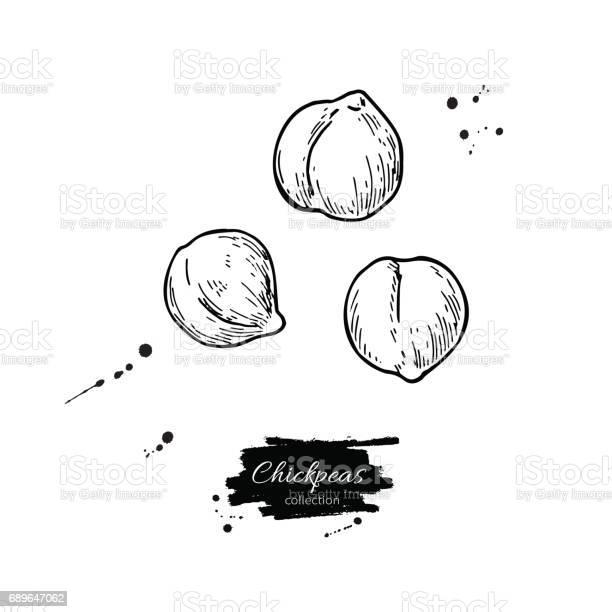 Chickpeas hand drawn vector illustration isolated vegetable engraved vector id689647062?b=1&k=6&m=689647062&s=612x612&h=uapedkax6g5upb5irf9 qzv5jwyjpqafaaden1oafzu=