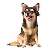 Chihuahua dog on sitting pose isolated on white background,vector illustration