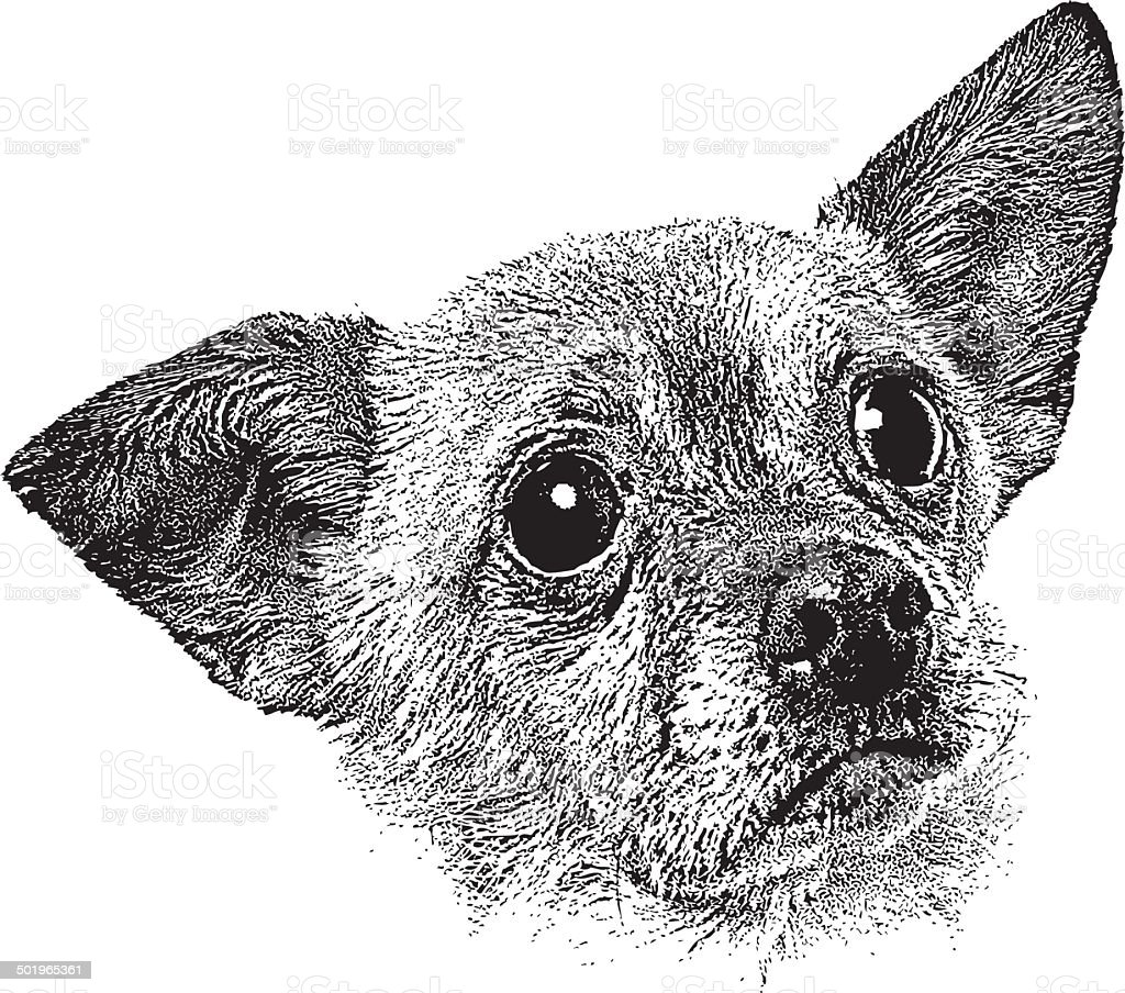 Chihuahua Puppy Head Stock Illustration Download Image Now Istock