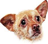 Mezzotint illustration of a Chihuahua puppy head.